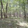 Nehantic State Forest