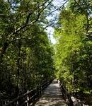 Mangrove Ngao Centro de Investigación Forestal