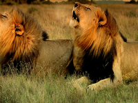 1 Day Group Of 6 Safari To Ngorongoro Crater