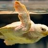 Nimbus At The North Carolina Aquarium At Pine Knoll Shores