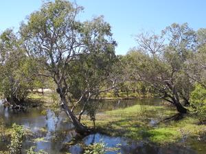 Australias Northern Territory - Crocs, Rock Art and Falls 6 Days Photos
