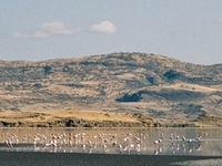 Lago Natron