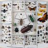 Carolina del Norte Museo de Insectos