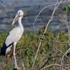 Open Bill At Navegaon Bandh Bird Sanctuary