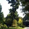 Botanical Garden of Naples