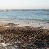 Pearly Beach