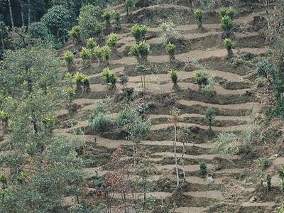 Peiryar - Cardomom Hills
