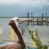 Pelican Sculpture - Buttonwood Sound - Key Largo FL