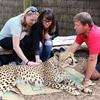 Pet Cheetah @ Wellington Zoo NZ