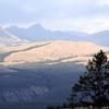 Petrified Forest - Specimen Ridge - Yellowstone - Wyoming - USA