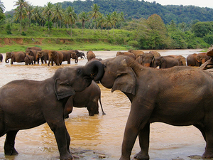 Visit Sri Lanka With Us For Memorable Holidays Photos