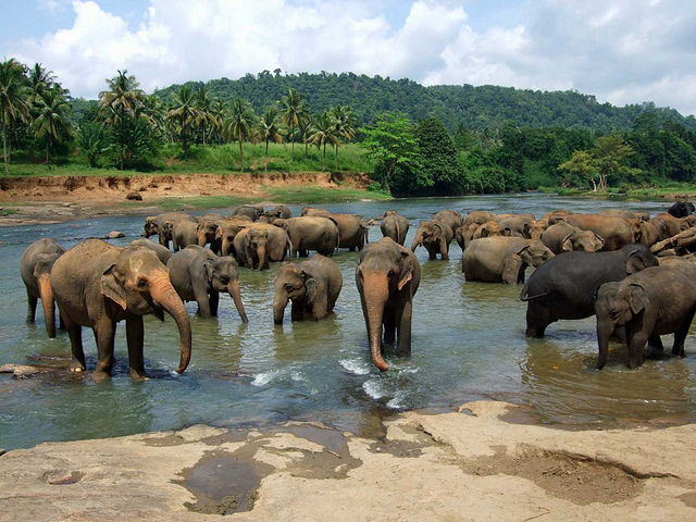 Unforgettable Sri Lanka Tour Photos