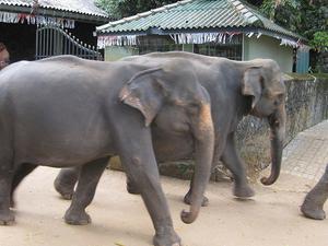 Grand Ramayana Trail in Sri Lanka Photos