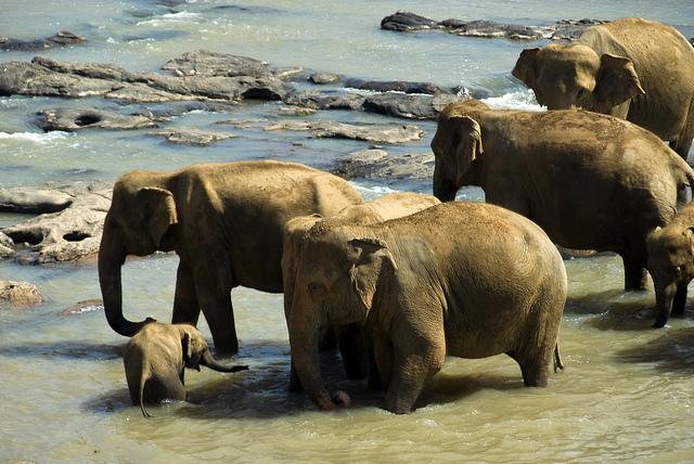 Sri Lanka Culture & Paradise Tour Photos