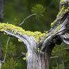 Plants Along Firehole Lake Drive - Yellowstone - USA