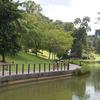 Pond At Singapore Botanic Gardens