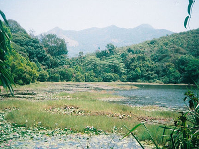 Pookode Lake In Summer