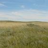 Prairie Near Brooks