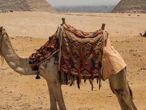 Egypt Pyramids Tour