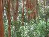 Los Arrayanes National Park