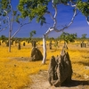 Queensland Termite Mounds AS