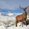 Rannoch Moor - Scotland UK