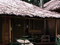Saj Jungle Village