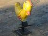 Rocking Duck Westburn