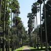 Royal Botanical Garden - Peradeniya