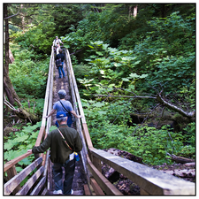 A Forest Path In The Tongass National Forest