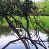 Decima Malafede Regional Park