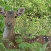 Sajjangarh Wildlife Sanctuary - Udaipur
