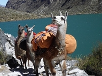 Hiking with Llamas, Santa Cruz - Vaqueria