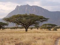 10 Days 9 Nights - Samburu/Nakuru/Masai Mara/Naivasha/Amboseli