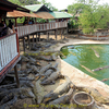 Samut Prakan Crocodile Farm And Zoo