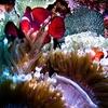 Scuba Diving In Bali - Indonesia