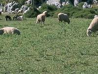 Sierra de Grazalema Natural
