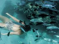 Snorkeling In Rasdhoo