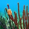 Soft Coral On Benwood Wreck - Key Largo FL