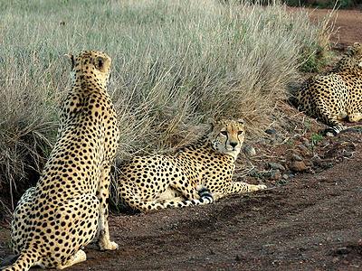South Turkana National Reserve