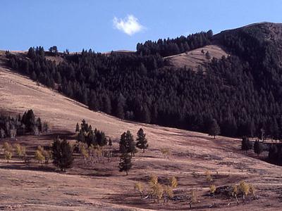 Specimen Ridge - Yellowstone - USA