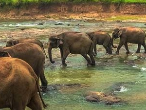 Wild Sri Lanka Tour Photos