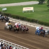 Stampede Chuckwagon Racing