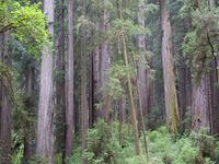 Streelow Creek Trail