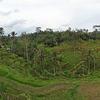 Subak Irrigation System