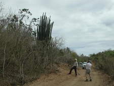 Sub-Tropical Dry Forest On Vieques