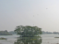 Sultanpur Parque Nacional