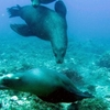 San Pedro Nolasco Island Diving Site