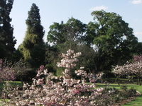 Johannesburg Botanical Garden