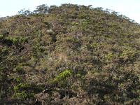 Mount Tambuyukon